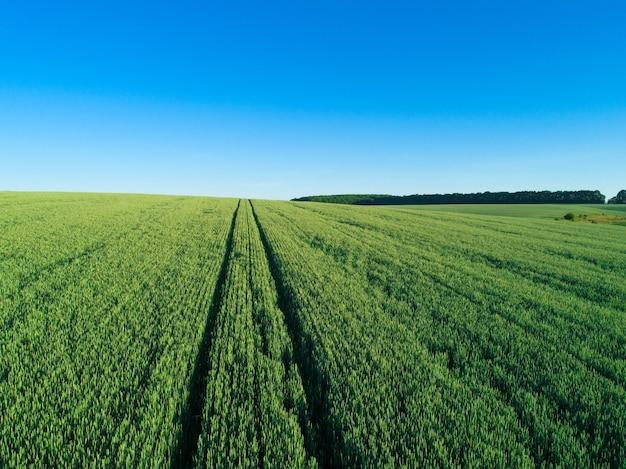 緑の野原と青い空