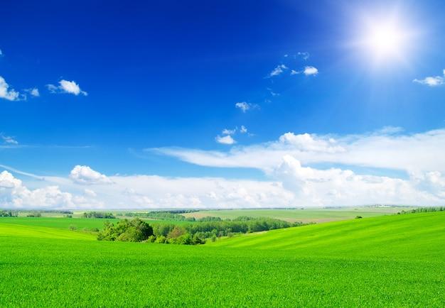 緑の野原と青空