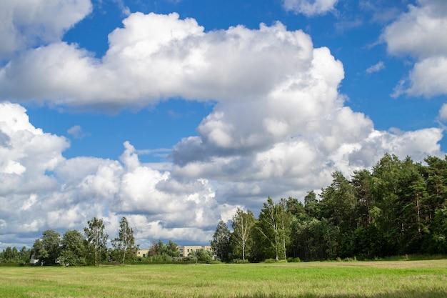 Зеленое поле, голубое небо и лес