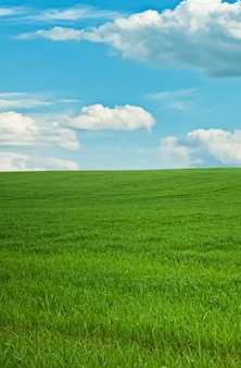 Green field and blue sky with clouds beautiful meadow as nature and environmental background