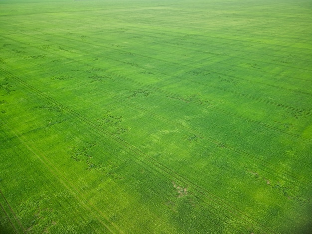 Green field in early spring aerial drone view