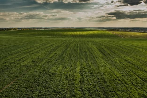 Зеленое поле с неба