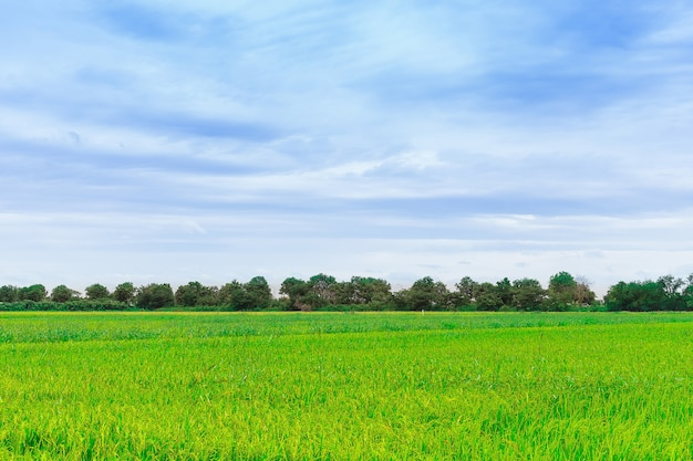 Green field green tree and blue sky background web banner