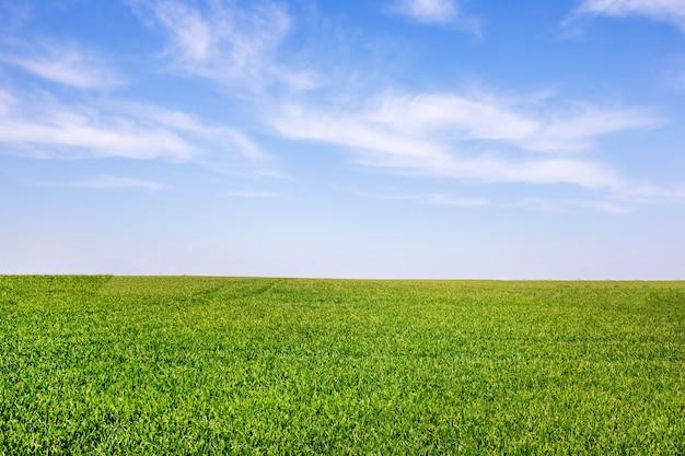 푸른 하늘과 흰 구름이 있는 봄의 그린 필드. 풍경 배경입니다. 농업 생산.