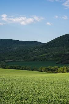 Зеленое поле в сельской местности под ярко-голубым небом с холмами