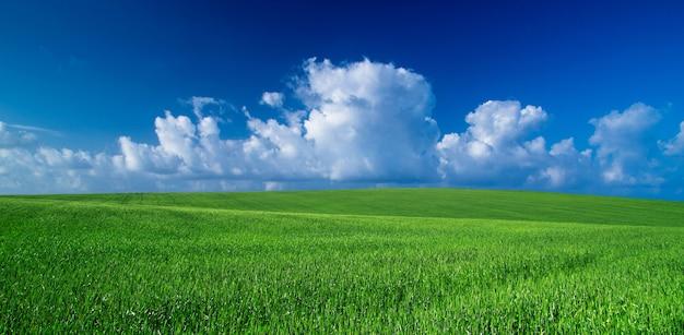 Зеленое поле пейзаж и синее голубое небо
