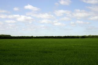 Green field, landscape