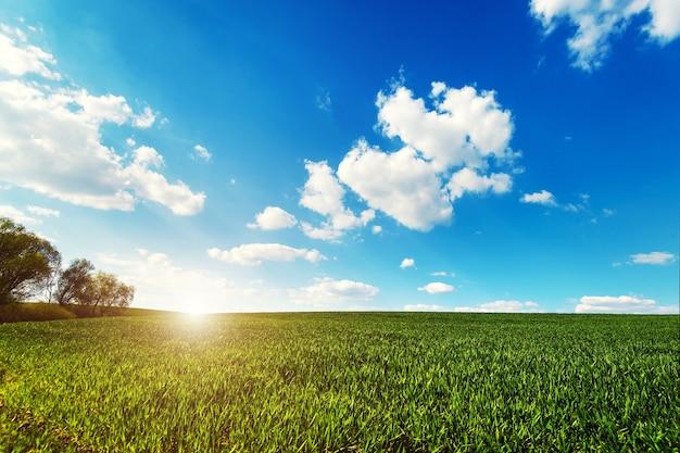 雲と青空の下の緑のフィールド。農業産業の風光明媚なイメージ。エコロジーコンセプトの写真。