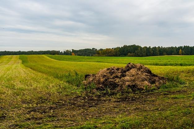 曇り空の下の緑の野原