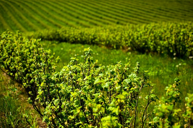 茂みと緑のフィールド