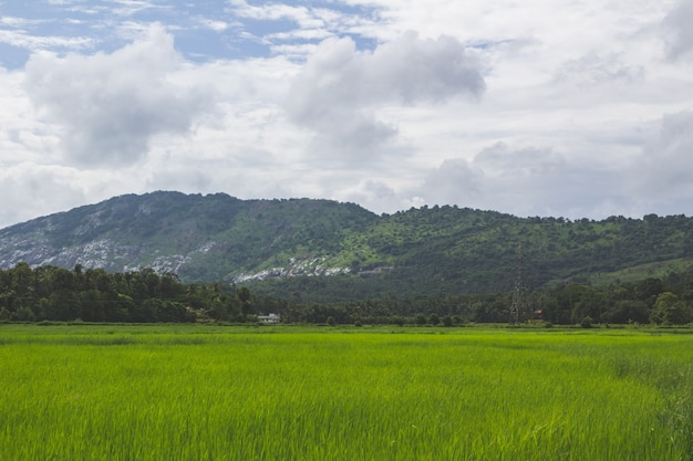 Green field with mountain in the background