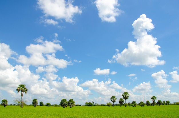 Green field with sky
