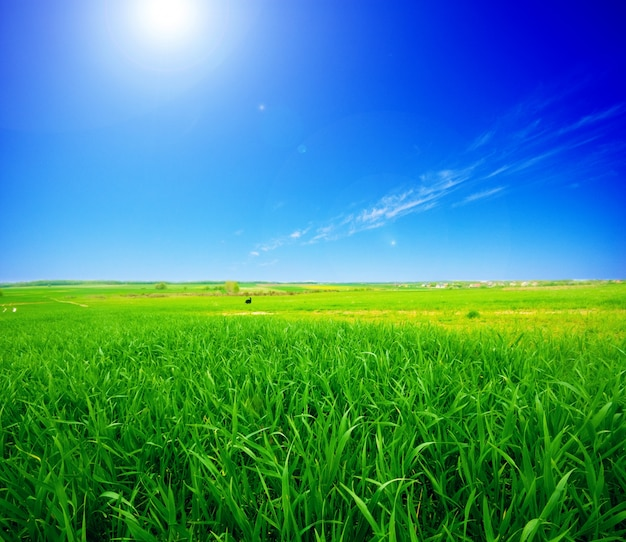 Green field with the sun