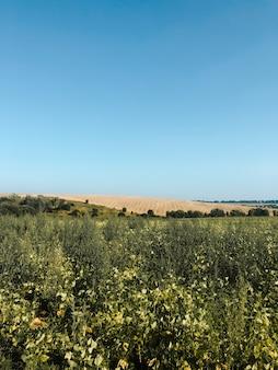 花が咲く背の高い草のある緑の野原