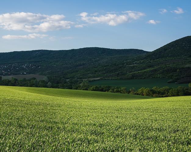 Зеленое поле с пасмурным утренним небом с холмами
