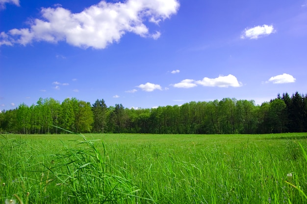 Green field with trees behind