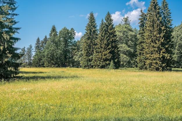 여름에는 야외에서 흰색과 노란색 민들레가 있는 녹색 들판. 낮에 밝은 녹색 여름 필드입니다. 공원에서 초원 하늘과 잔디 배경
