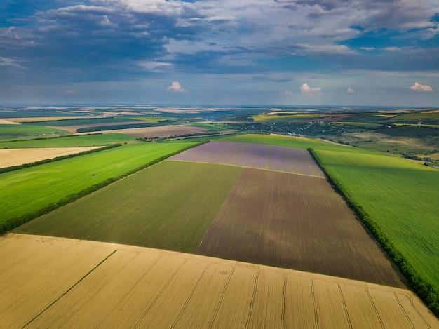 Зеленые поля с высоты птичьего полета до сбора урожая летом