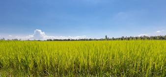 Green fields and blue skies, beautiful and bright.