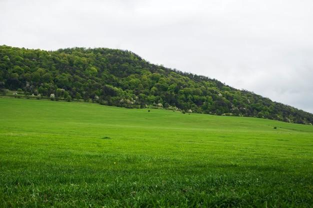 낮에는 언덕에 녹색 들판과 숲