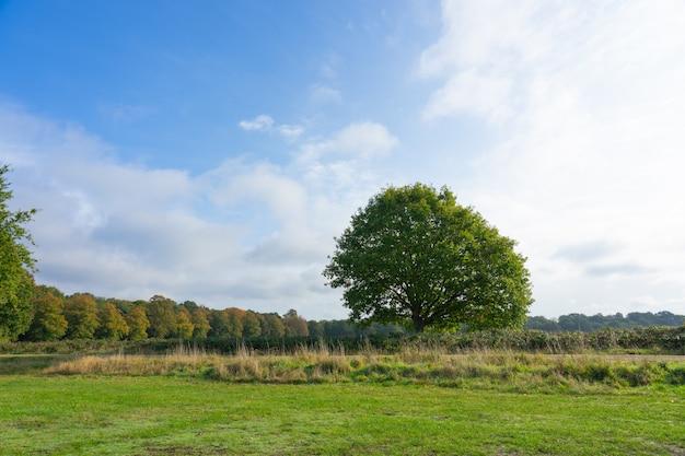 화창한 날에 녹색 필드와 나무