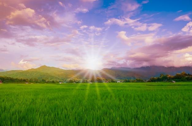 梅雨の緑の野原と青空の美しい自然風景