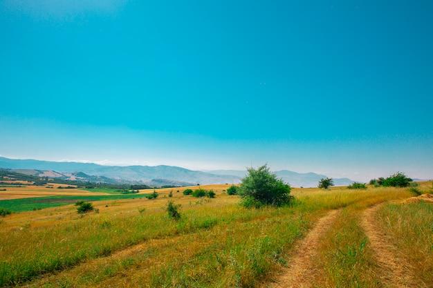 夏の太陽の下で緑の野原