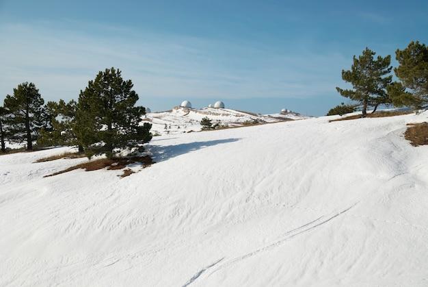 눈 덮인 산에서 녹색 전나무