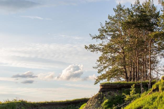 흐린 하늘을 배경으로 경사면에 푸른 전나무와 소나무