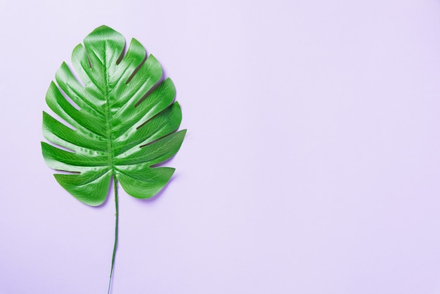 Green flat lay tropical monstera leaves
