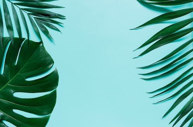 Green flat lay tropical palm leaf branches on cyan blue background. room for text, copy, lettering.