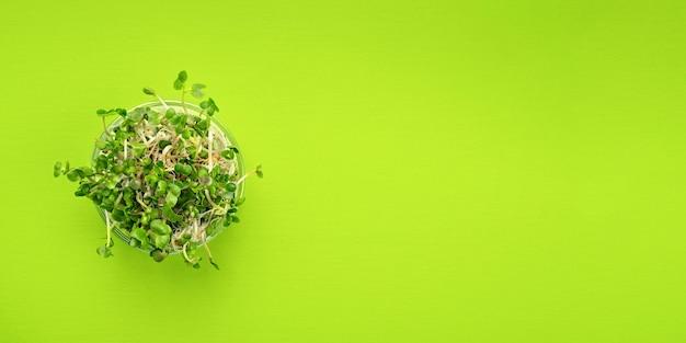 Зеленая квартира лежал овощи концепции. микро зелень