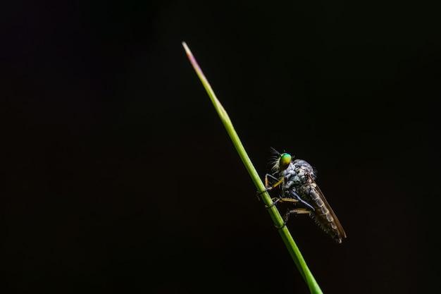 Green flies on black background
