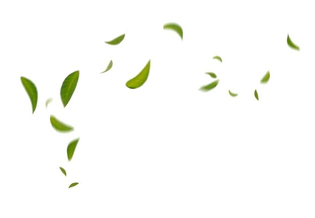 Зеленые плавающие листья летающие листья танцы зеленых листьев, атмосфера очистителя воздуха простое основное изображение