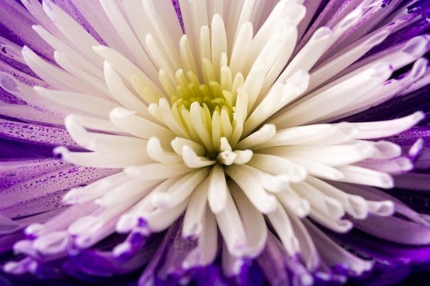 Green flower closeup