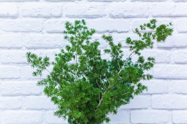 흰색 세라믹 벽의 배경에 있는 탁자 위의 투명한 꽃병에 있는 녹색 꽃