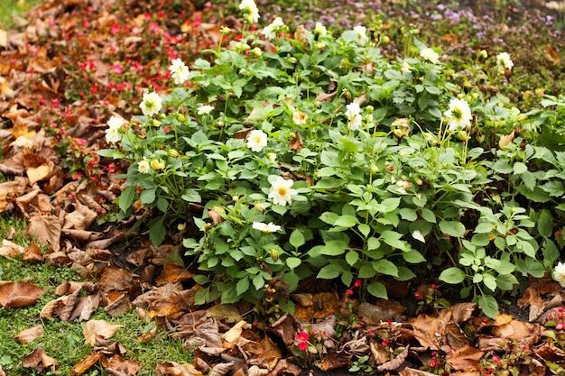 公園のクローズアップの真ん中に白い花と緑の花壇