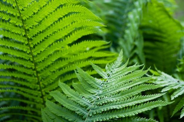 숲에서 봄 시간에 녹색 꽃 화분