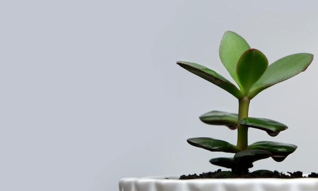 灰色の背景に白い鍋に緑の花。