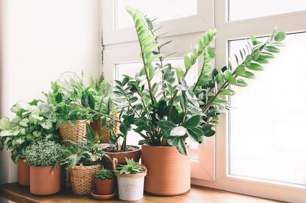 창에 냄비에 녹색 꽃 프리미엄 사진