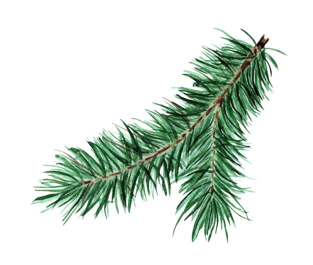緑のふわふわ針葉樹枝クリスマス新年モミ松モミの水彩イラストi