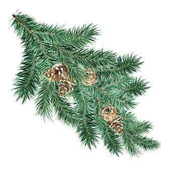 コーンと緑のふわふわトウヒの松の枝クリスマスと新年の装飾の水彩イラスト