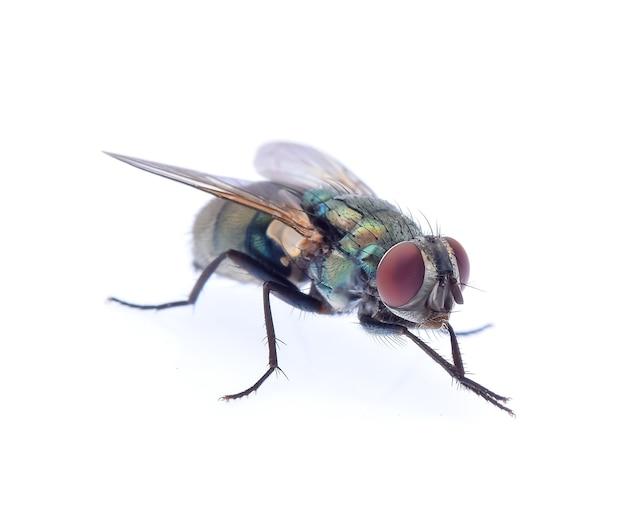 Зеленая муха, изолированные на белом фоне