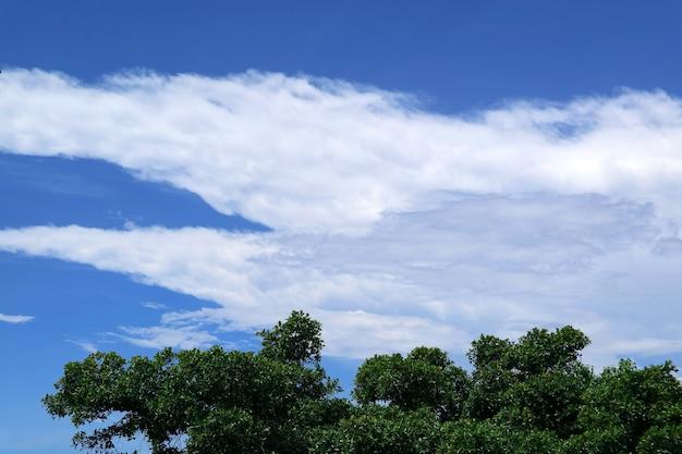 晴れた日の白い雲と青い空に対する緑の葉