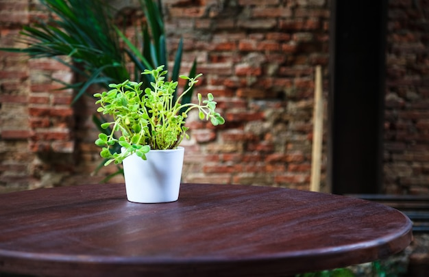 Green foliage houseplant in white pot on wooden table
