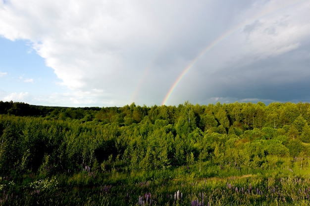 Green foliage in a mixed forest, blue lupins and a dark stormy sky, on which a colored rainbow glows, a landscape of thunderstorms