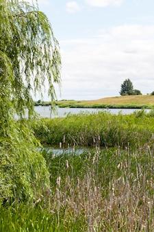 小さな池や湖の近くで育つ植物の緑の葉