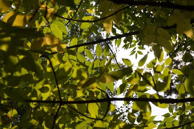 Зеленая листва на деревьях ранней осенью
