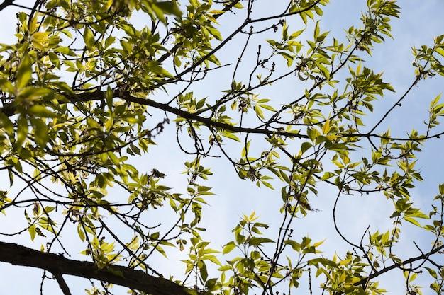 春の樹木に緑の葉