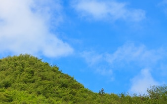 Green forest and blue sky with white cloud background
